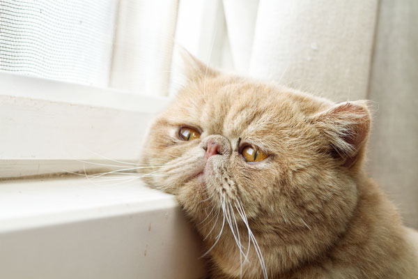sad cat in a new home photo